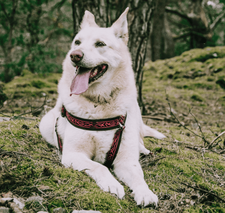 Hiking with your dog 2